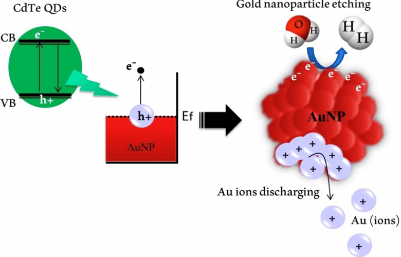 Gold nanoparticle dissolution
