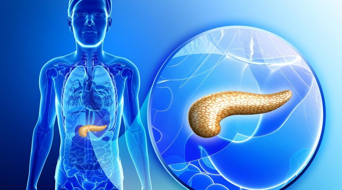 Creating human pancreas