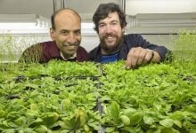 کنترل زمان گل دهی گیاهان