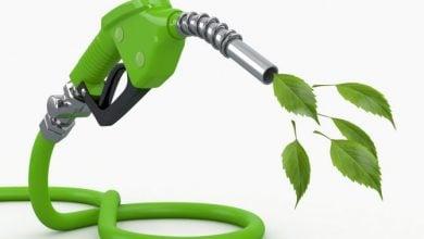 Photo of افزایش بهره وری تولید سوخت زیستی از لیگنوسلولوز با استفاده از مهندسی مسیرهای بیوسنتز مونولیگنول