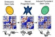 Photo of خطاهای تا خوردگی مؤثر در عدم توانمندی سلول های بنیادین آزمایشگاهی