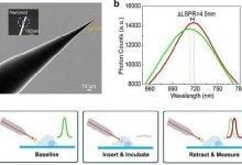 Photo of به کمک نانوفناوری می توان مطالعاتی دقیق، بر روی پروتئین های سلول زنده به انجام رساند