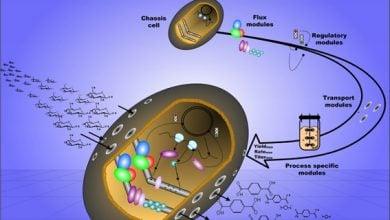 Photo of الکتروسنتز میکروبی: میکروبها وارد میشوند!