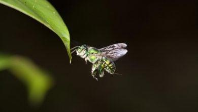 Photo of چشمان حشرات؛ رهیافتی به چگونگی پرواز مستقل پهپادها