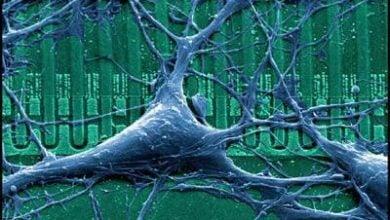 Photo of روشی نوین جهت افزایش زمان نگاهداری دستگاه های قابل کاشت در بدن