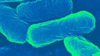 Photo of آیا باکتری E. coli حاملی ایده آل برای نسل بعدی واکسن ها می باشد؟