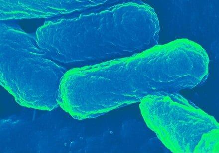 آیا باکتری E. coli حاملی ایده آل برای نسل بعدی واکسن ها می باشد؟