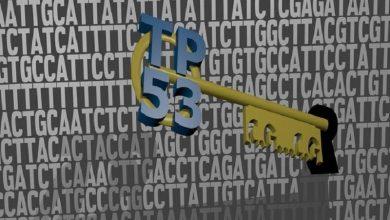 Photo of پروتئین بازدارنده سرطان، راه خود را در DNA ما می یابد