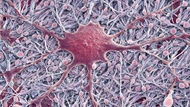 Photo of سلول های معمول مغزی از طریق مسیرهای غیر منتظره ای می توانند به شکل دهی سیستم عصبی بپردازند