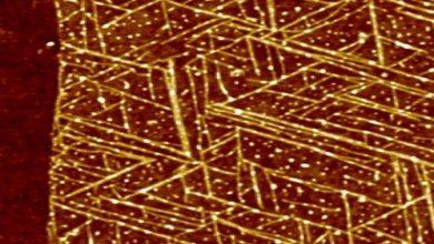 Photo of پل های پروتئینی جدید فاصله شیمیایی بین زیست شانسی و ابزارهای بیوالکترونیکی را از بین می برند