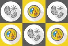 پپتیدهای ضدمیکروبی میتوانند باکتری های مقاوم به آنتی بیوتیکها را از بین ببرند.