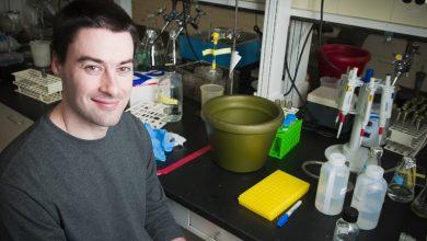 Photo of کم کردن سمیت باکتری اشریشیا کلای، توسط افزودنی ساده مواد غذایی
