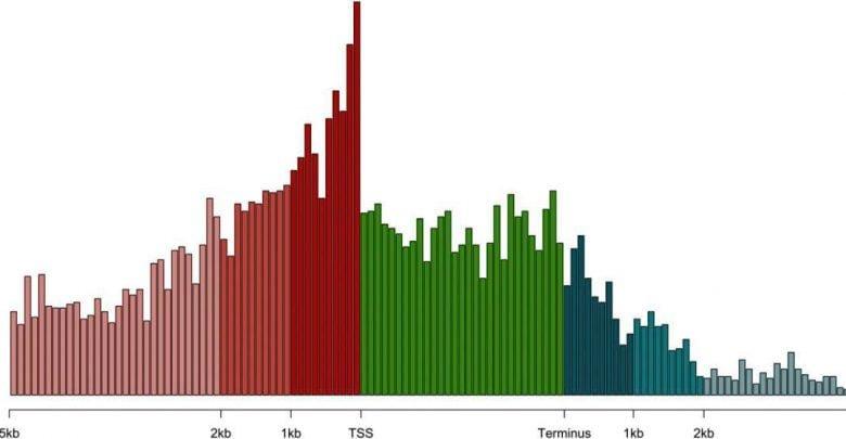 شناسایی ژن های اصلی در پاسخ گیاه نسبت به خشکی