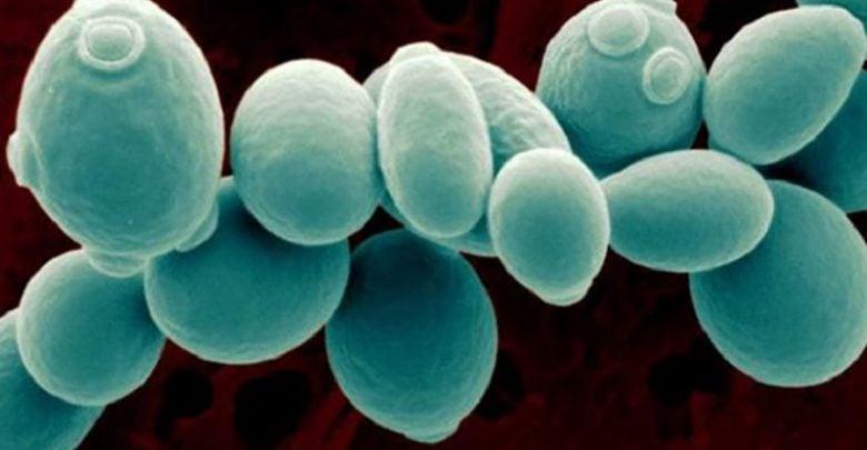 بهبود فرآیند تخمیری مخمرها با تغییر رفتار سلولی