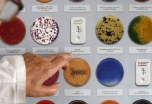 Photo of تماشا کنید: تکامل مقاومت آنتی بیوتیکی در باکتری ها