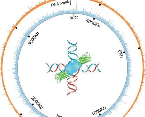 درمان سرطان با پروتئین های سنتزی در تعمیر DNA