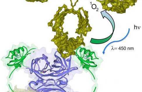 تصفیه ی آب با استفاده از پروتئین ها، جهت جلوگیری از شیوع بیماری ها