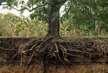 Photo of در جستجوی ریشه: پیش بینی زیست توده ریشه گیاهان از طریق ظرفیت خازنی