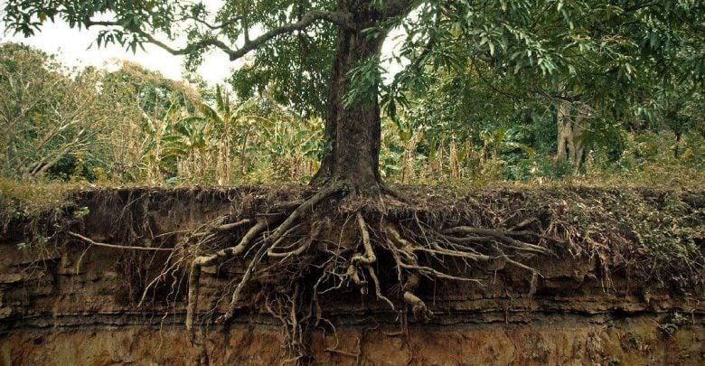 در جستجوی ریشه: پیش بینی زیست توده ریشه گیاهان از طریق ظرفیت خازنی