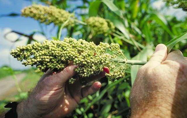 شناسایی یک مکانیسم دفاعی در گیاهان