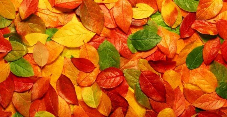 استفاده از برگهای پاییزی در صنایع