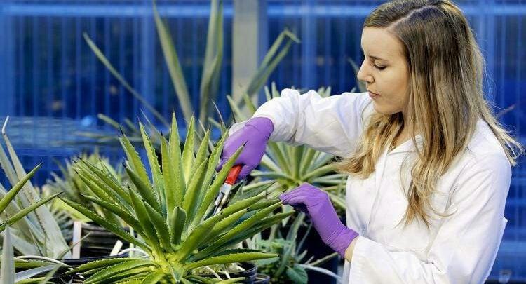 به سوی تولید گیاهان مقاوم به خشکی