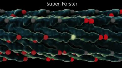 Photo of انتقال انرژی توسط ویروس ها