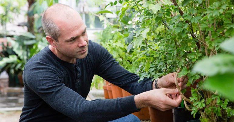 تولید سوخت زیستی با آنزیم گیاهی