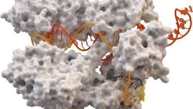 Photo of کشف دو آنزیم جدید  CRISPR-Cas
