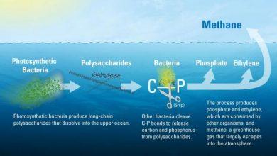 Photo of منبع ناشناخته ی گاز متان در اقیانوسها