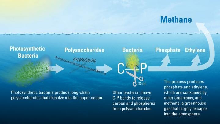 منبع ناشناخته ی گاز متان در اقیانوسها