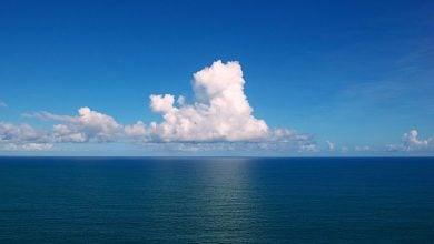 Photo of ریزجلبکهای دریایی؛ منبع غذا و انرژی آینده ی بشر
