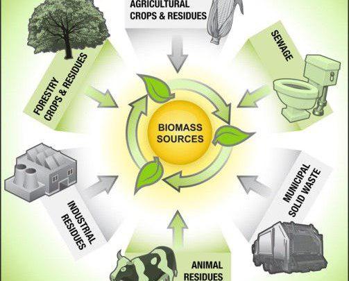 مروری بر وضعیت خوراک های زیست توده ای صنایع