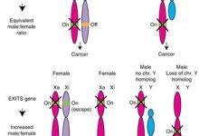 Photo of شیوع بیشتر سرطان در مردان نسبت به زنان