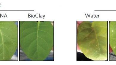 Photo of نانوذرات حامل RNA های دورشته ای برای محافظت از گیاهان