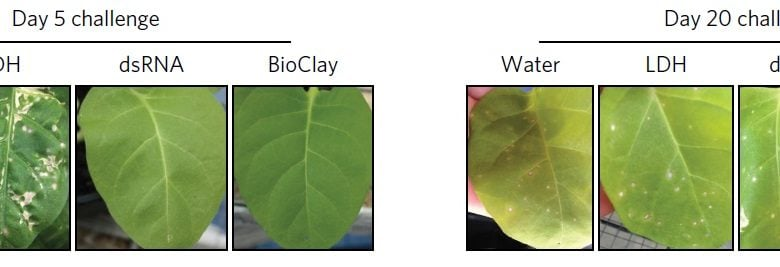نانوذرات حامل RNA های دورشته ای برای محافظت از گیاهان - زیست فن - زیست فناوری