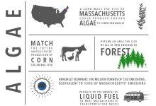 Photo of تاثیر محصولات جلبکی بر کاهش گازهای گلخانه ای