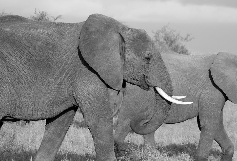 آنچه انسان ها از فیل ها در مورد سرطان می آموزند - زیست فن - زیست فناوری