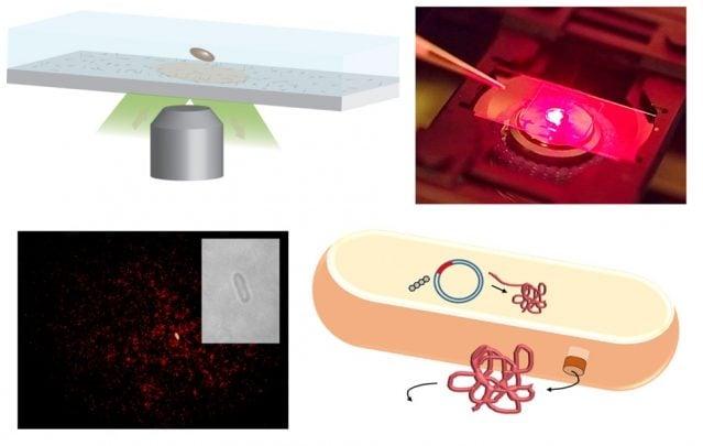 نانولوله های اصلاح شده را می توان برای تولید پروتئین از طریق تک سلول ها مورد استفاده قرار داد.