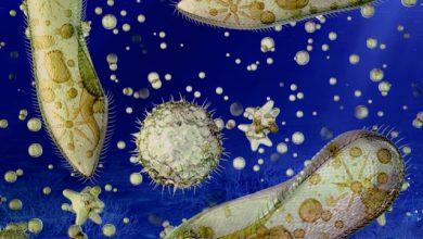 Photo of حیات در اعماق اقیانوس ها