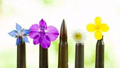 Photo of گلوله های دوست دار محیط زیست