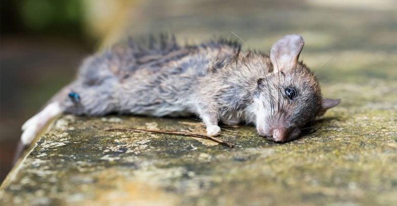 ژن ها روزها پس از مرگ حیوانات، به فعالیت خود ادامه می دهند.