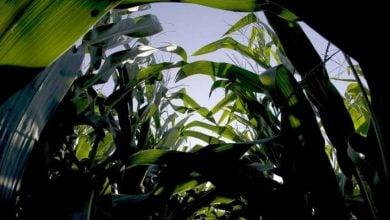 Photo of پاشنه آشیل تولید محصولات کشاورزی