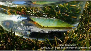 تولید هیدروژن سوختی با برگ مصنوعی - زیست فن زیست فناوری