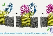 Photo of ماشین های پدال دار، شیوه ی جذب مواد غذایی باکتری های روده