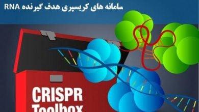 Photo of سامانه های کریسپری با هدف گیری RNA