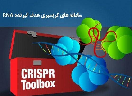 محققین MIT و هاروارد موفق شده اند دو نوع جدید از سامانه های کریسپری با هدف RNA را کشف و مشخصه یابی کنند که از آنزیم Cas13b استفاده می کنند.