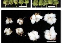 کنترل مگس سفید - زیست فناوری