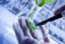گردش مالی 2 تریلیون دلاری زیستفناوری در دنیا - زیست فن - زیست فناوری