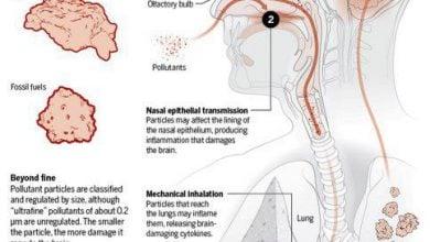 Photo of نقش آلودگی هوا در ابتلا به آلزایمر و زوال مغزی